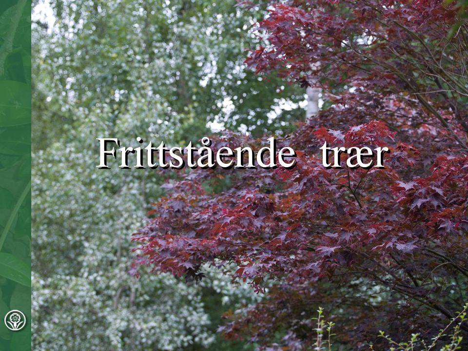 Frittstående trær Frittstående trær Frittstående trær