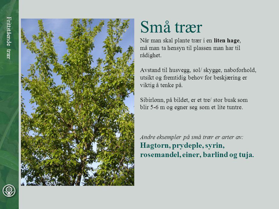 Små trær Hagtorn, prydeple, syrin, rosemandel, einer, barlind og tuja.