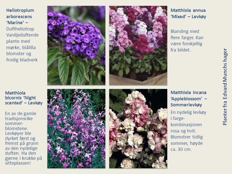 Planter fra Edvard Munchs hager