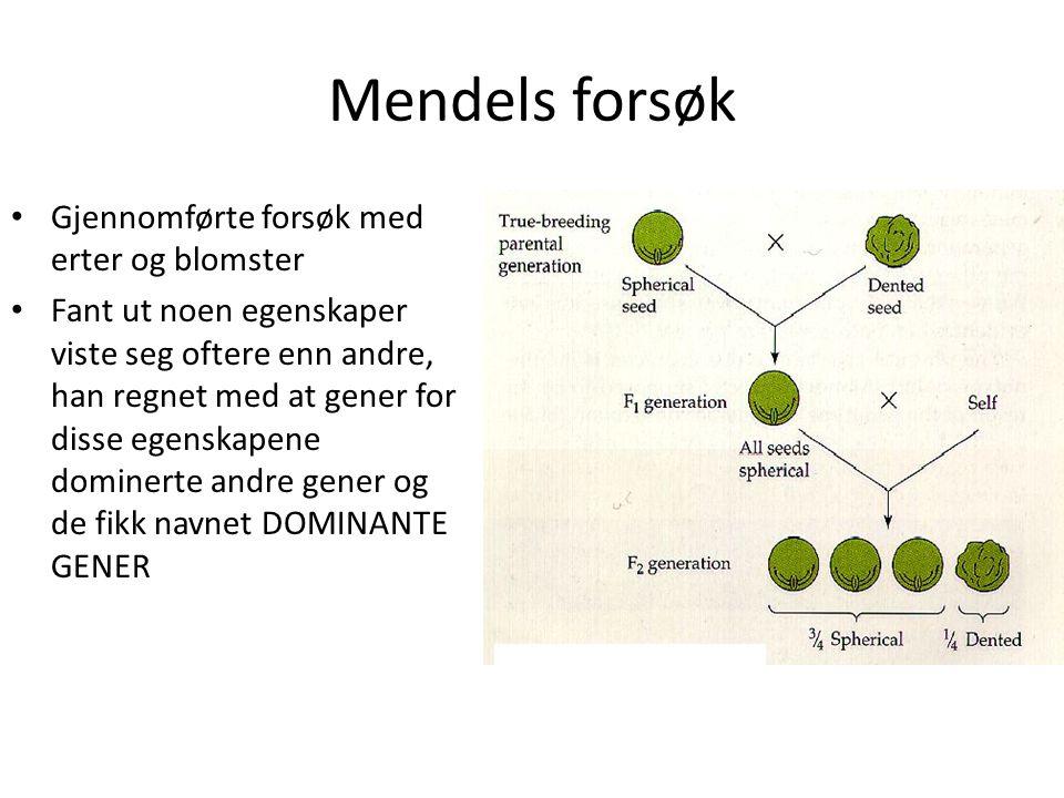 Mendels forsøk Gjennomførte forsøk med erter og blomster