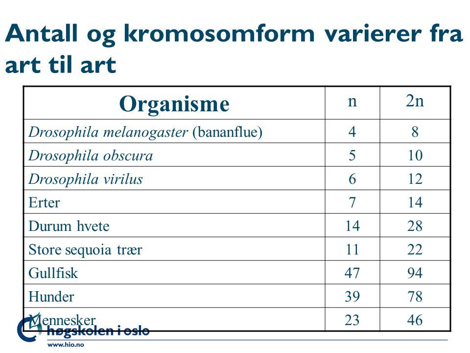 Antall og kromosomform varierer fra art til art