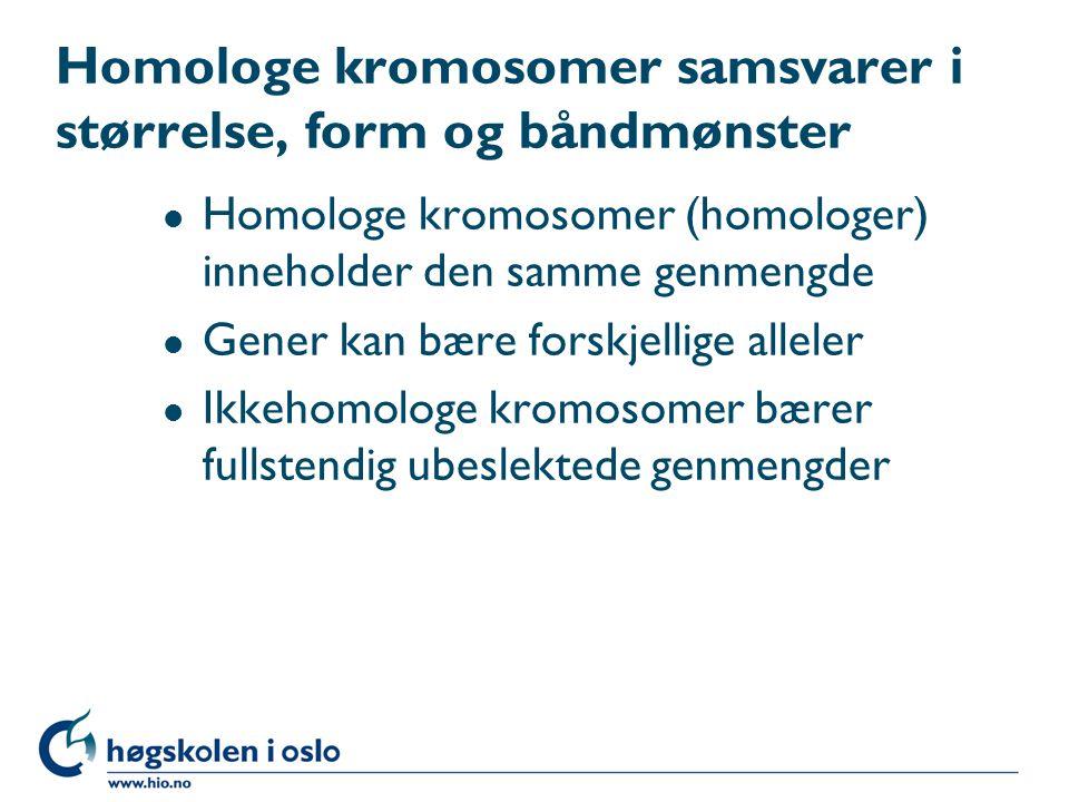 Homologe kromosomer samsvarer i størrelse, form og båndmønster
