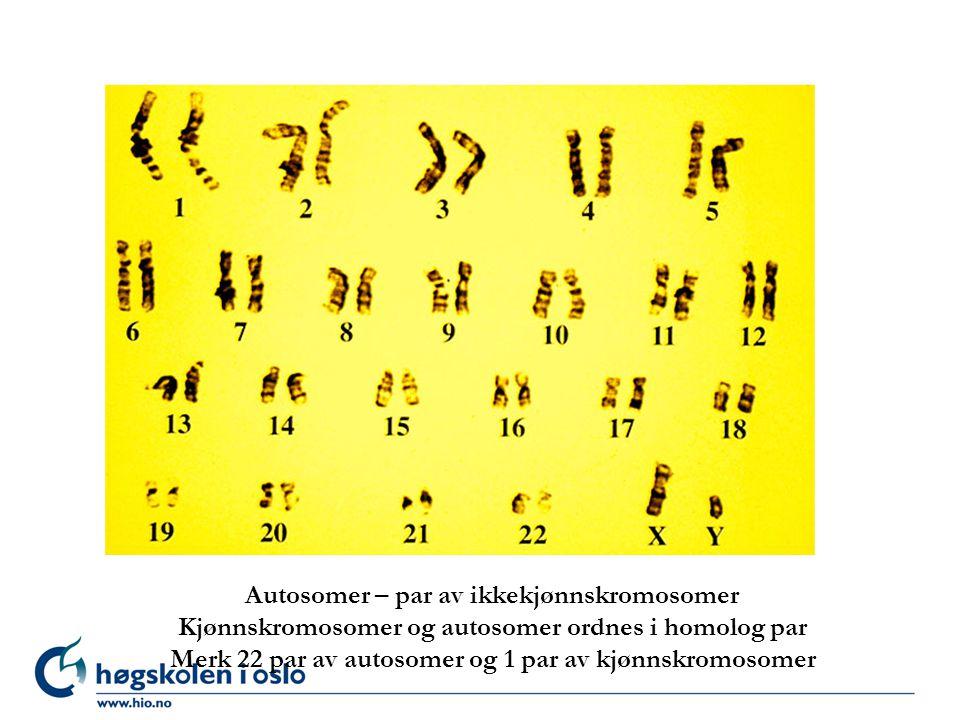 Autosomer – par av ikkekjønnskromosomer