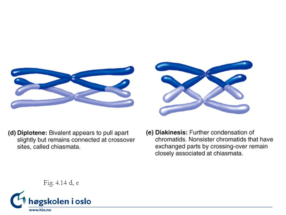Figure 4.14 d, e Fig. 4.14 d, e