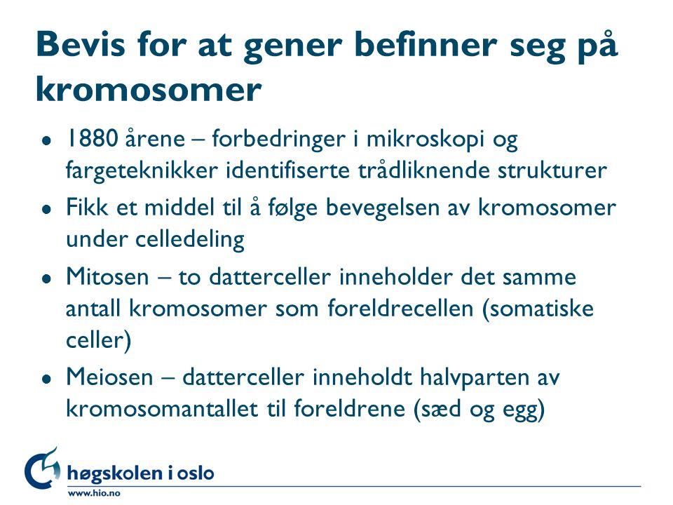 Bevis for at gener befinner seg på kromosomer