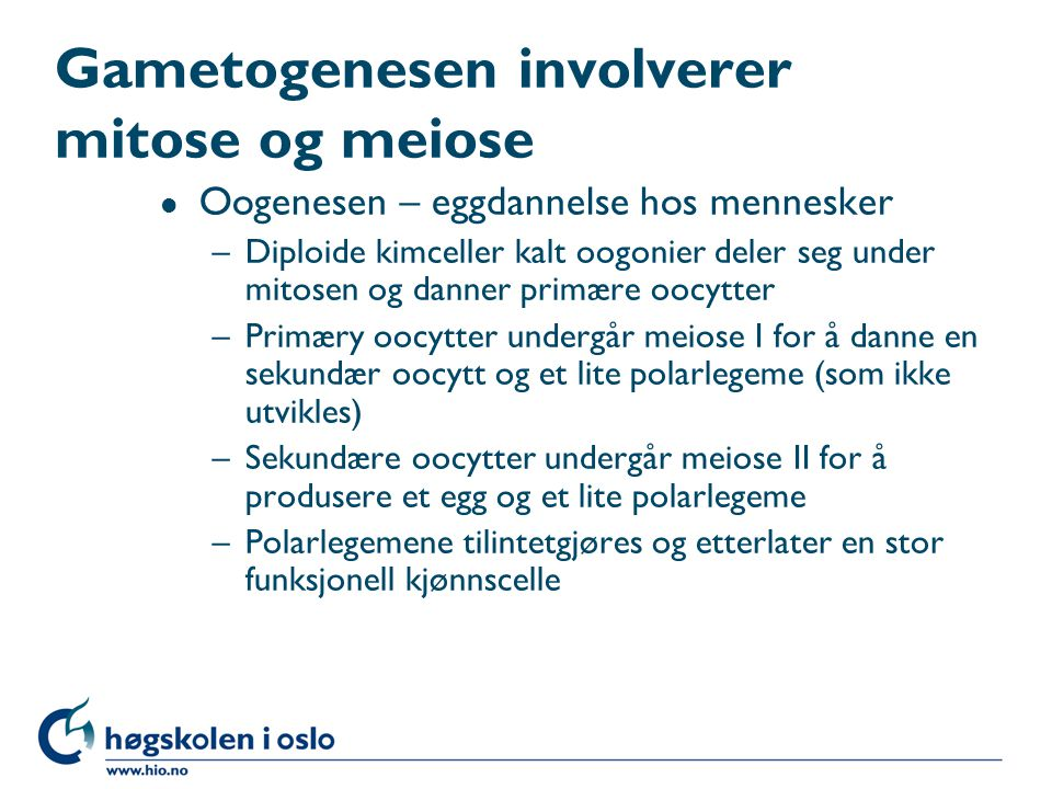 Gametogenesen involverer mitose og meiose