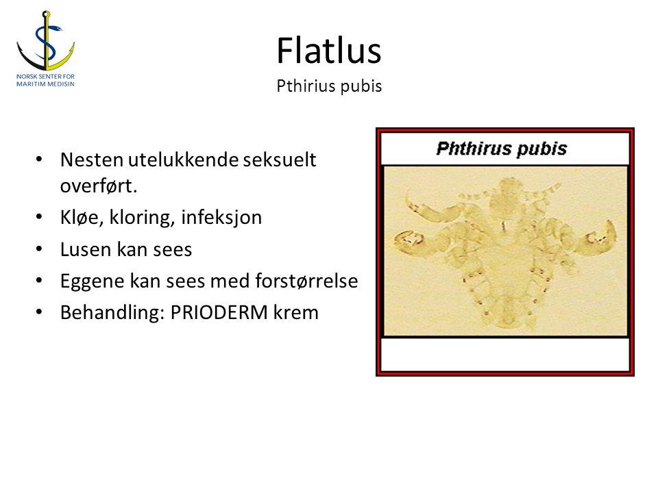 Flatlus Pthirius pubis
