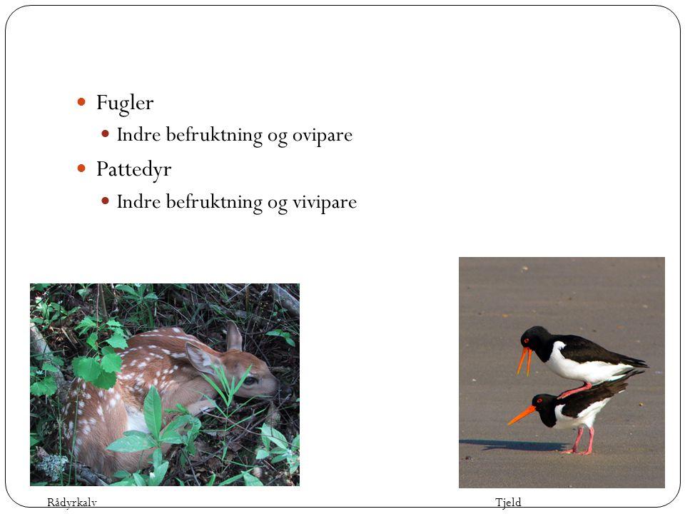 Fugler Pattedyr Indre befruktning og ovipare