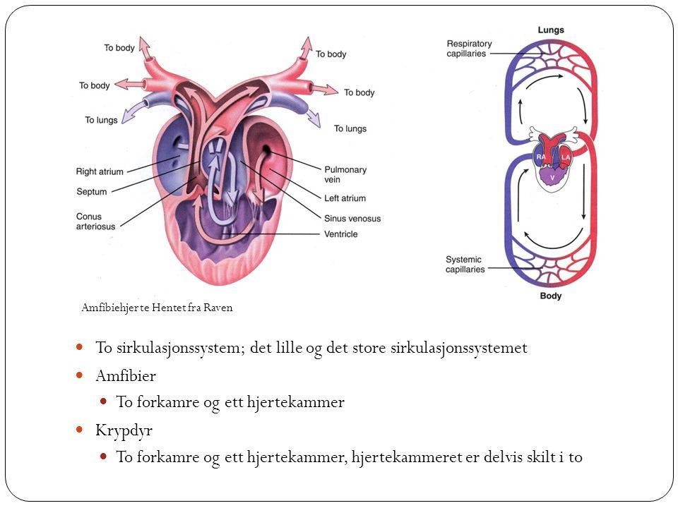 To sirkulasjonssystem; det lille og det store sirkulasjonssystemet
