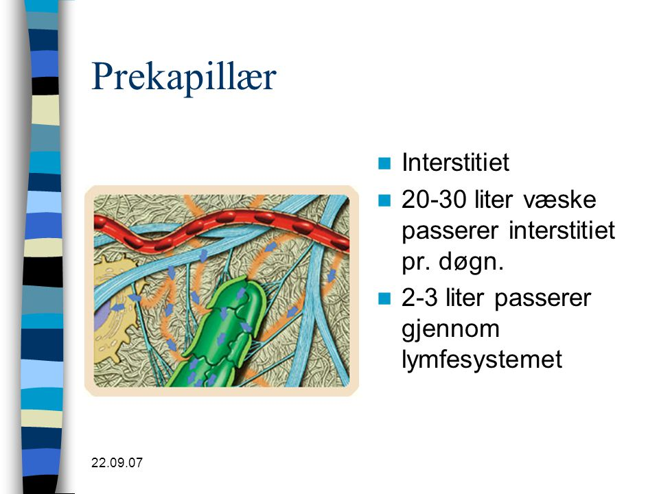 Prekapillær Interstitiet