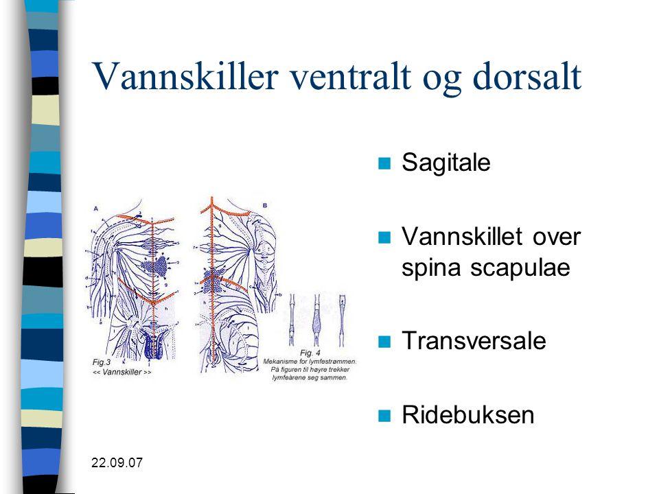 Vannskiller ventralt og dorsalt