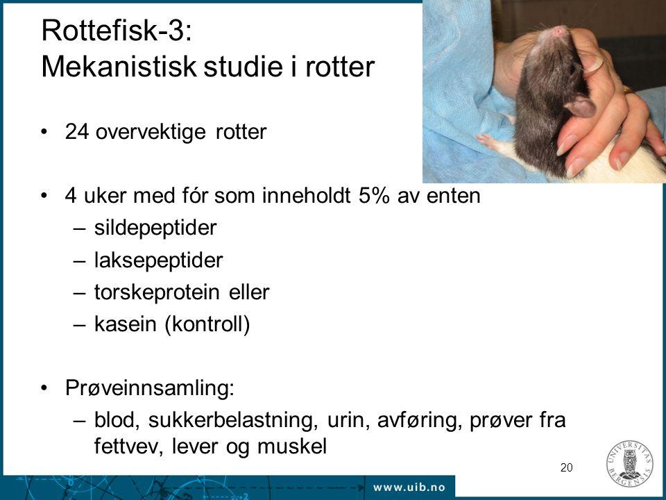 Rottefisk-3: Mekanistisk studie i rotter