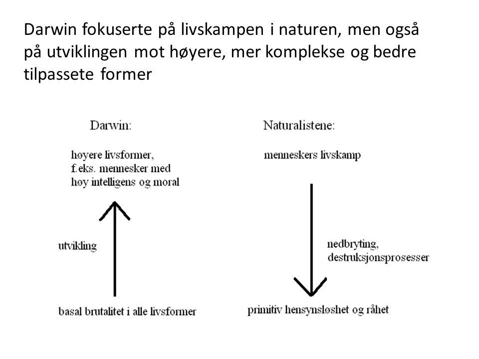 Darwin fokuserte på livskampen i naturen, men også på utviklingen mot høyere, mer komplekse og bedre tilpassete former