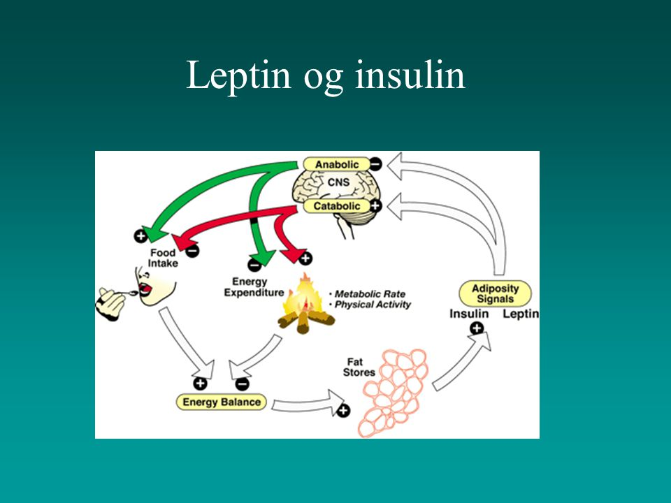 Leptin og insulin