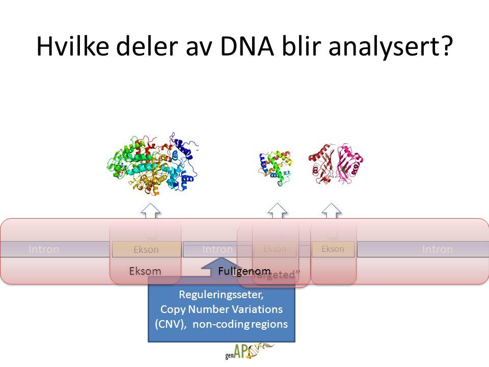Hvilke deler av DNA blir analysert