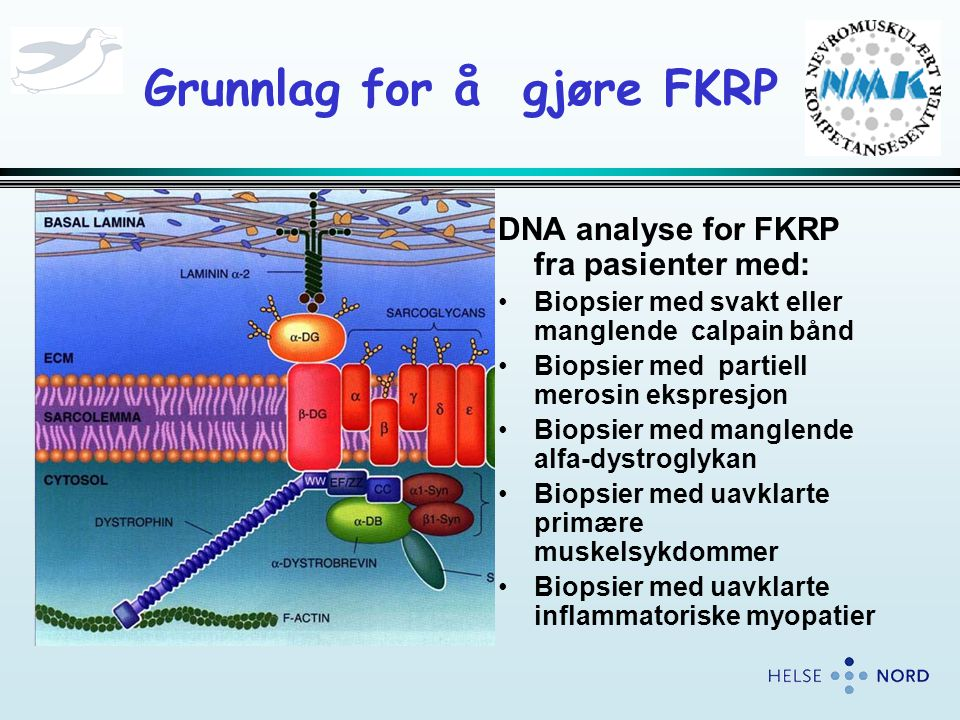 Grunnlag for å gjøre FKRP