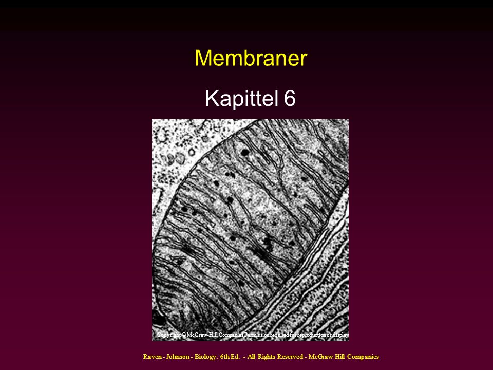 Membraner Kapittel 6. Copyright © McGraw-Hill Companies Permission required for reproduction or display.