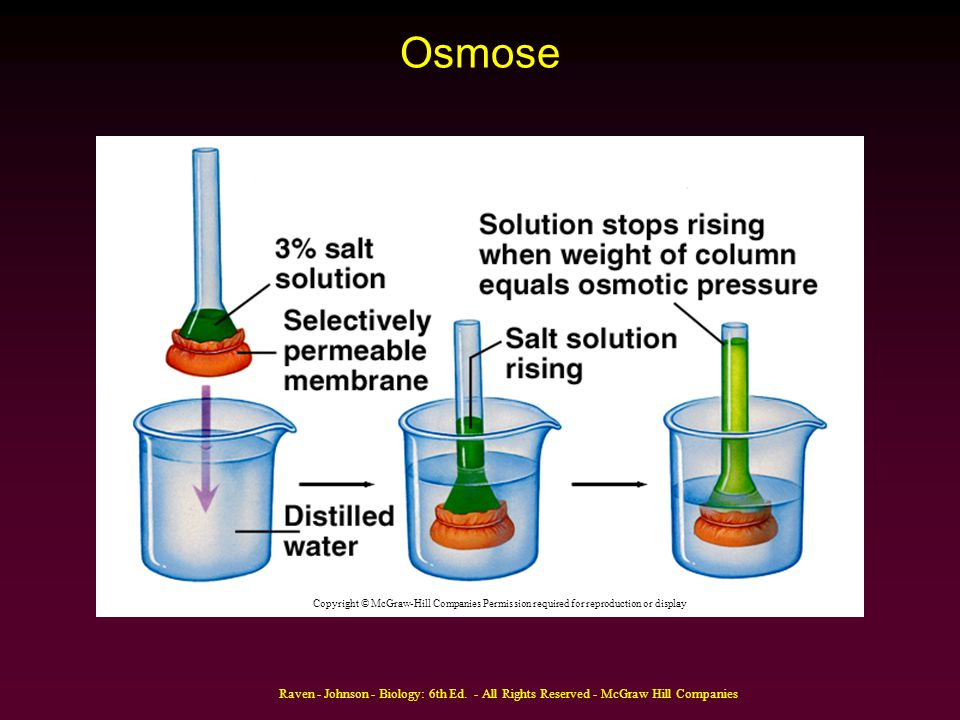 Osmose Copyright © McGraw-Hill Companies Permission required for reproduction or display.