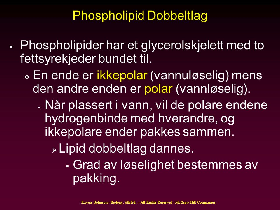 Phospholipid Dobbeltlag