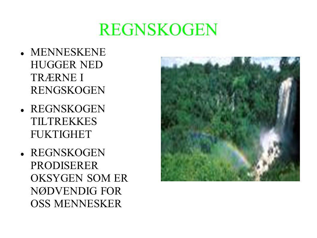 REGNSKOGEN MENNESKENE HUGGER NED TRÆRNE I RENGSKOGEN
