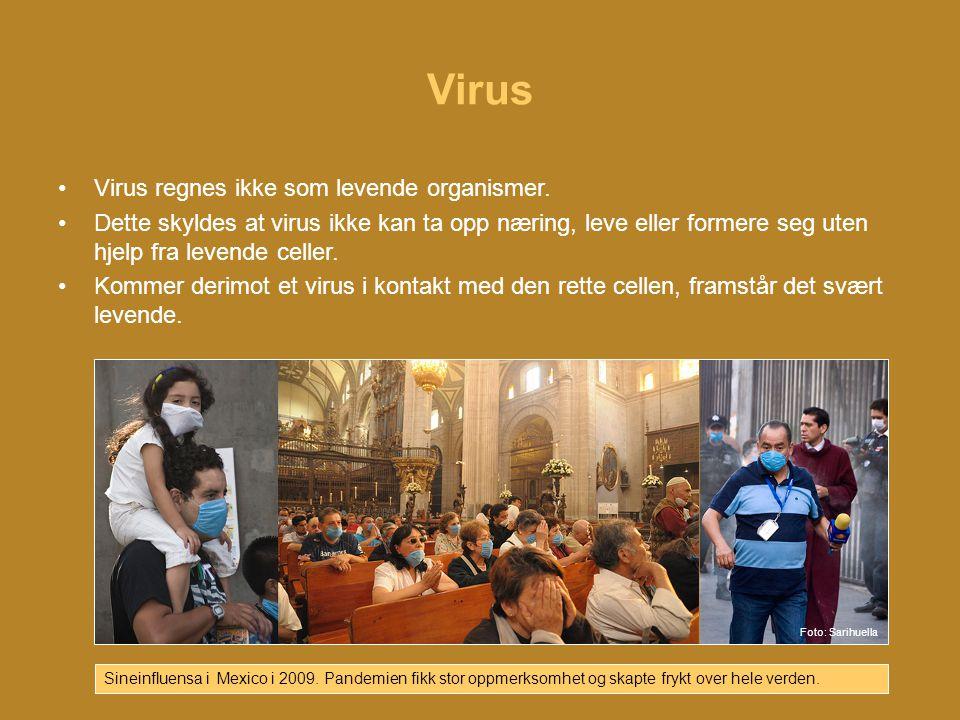 Virus Virus regnes ikke som levende organismer.