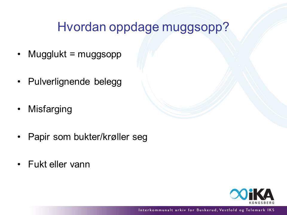 Hvordan oppdage muggsopp