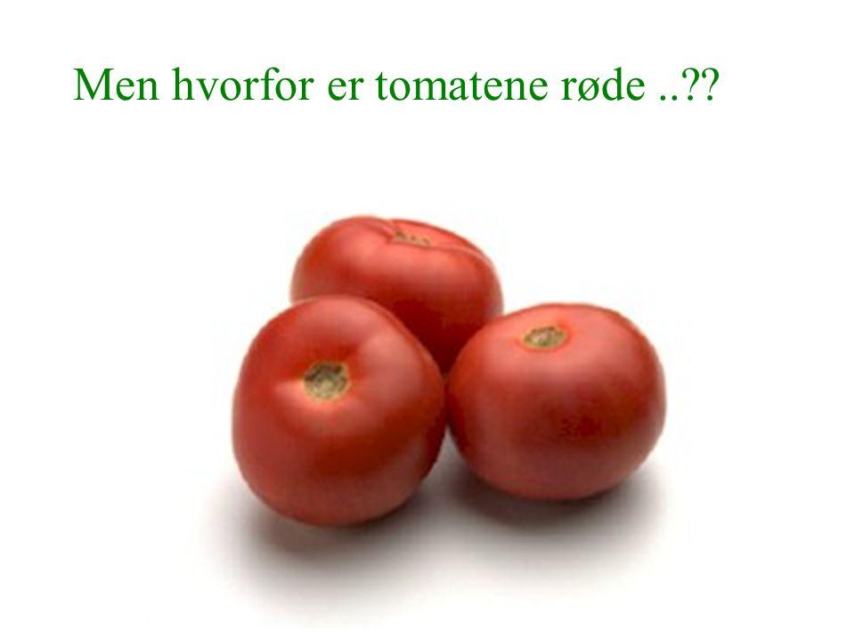 Men hvorfor er tomatene røde ..