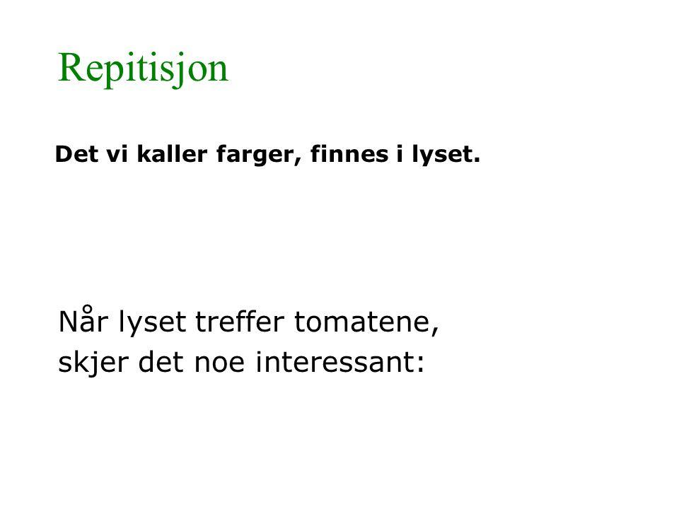 Repitisjon Når lyset treffer tomatene, skjer det noe interessant: