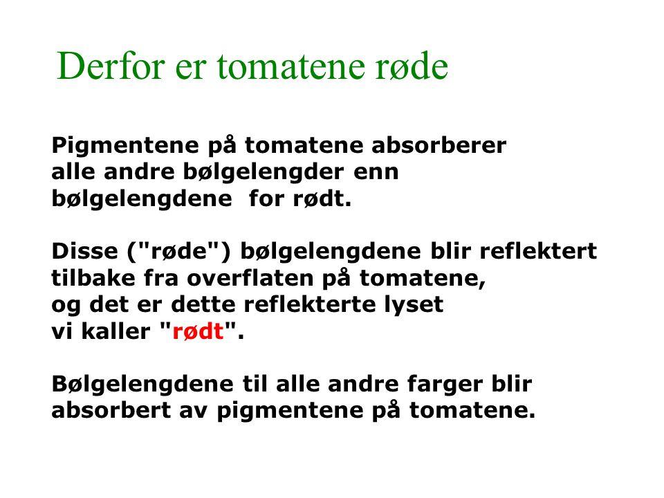 Derfor er tomatene røde