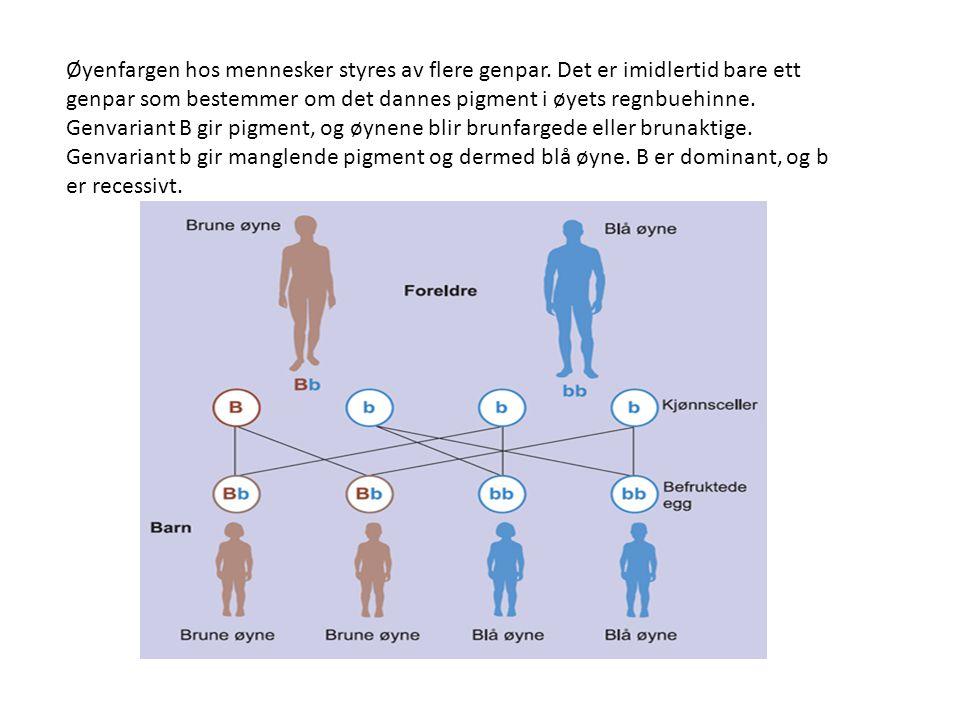 Øyenfargen hos mennesker styres av flere genpar