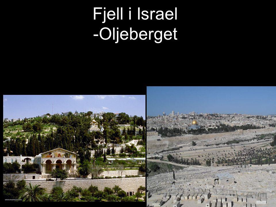 Fjell i Israel -Oljeberget
