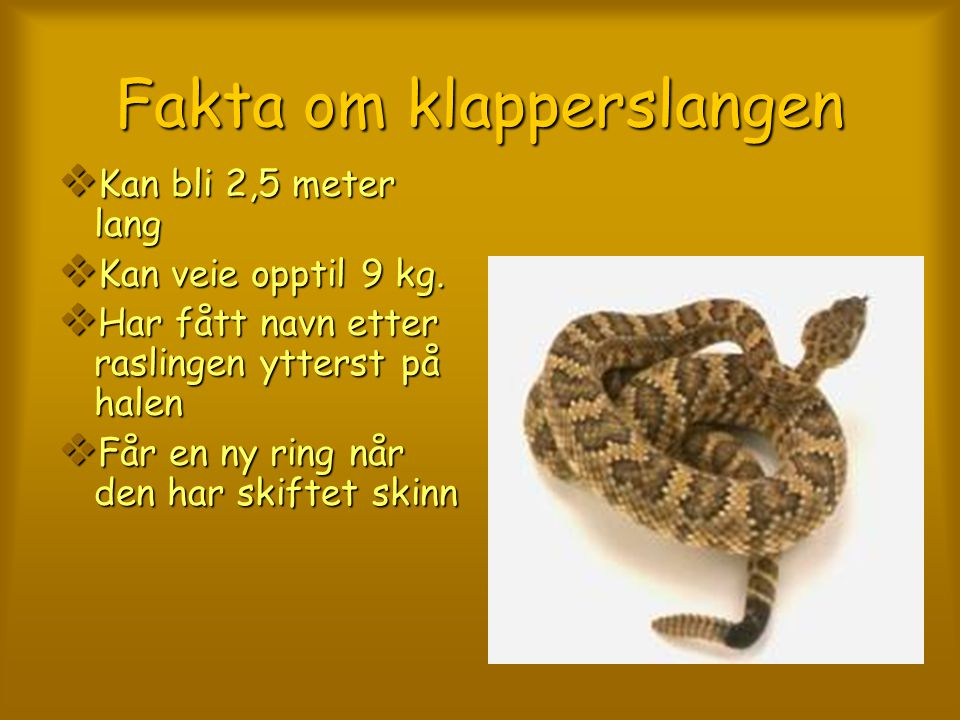 Fakta om klapperslangen