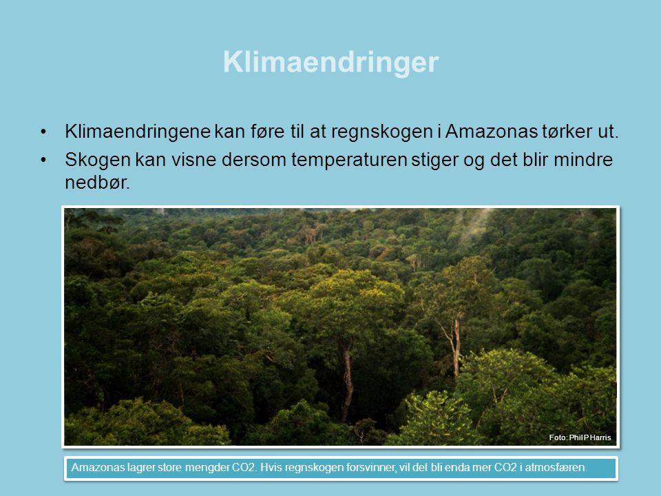 Klimaendringer Klimaendringene kan føre til at regnskogen i Amazonas tørker ut.