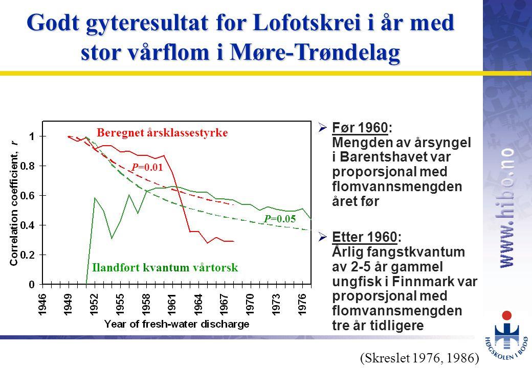 Godt gyteresultat for Lofotskrei i år med stor vårflom i Møre-Trøndelag