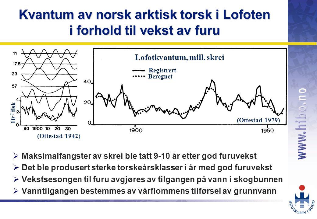 Kvantum av norsk arktisk torsk i Lofoten i forhold til vekst av furu