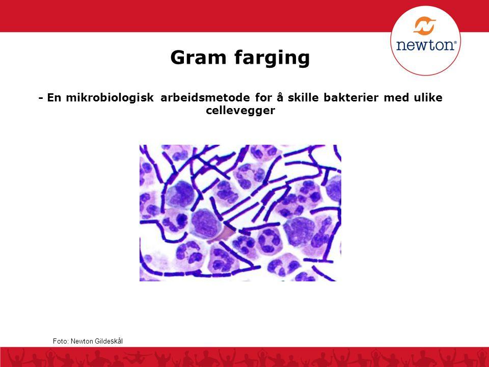 Gram farging - En mikrobiologisk arbeidsmetode for å skille bakterier med ulike cellevegger.
