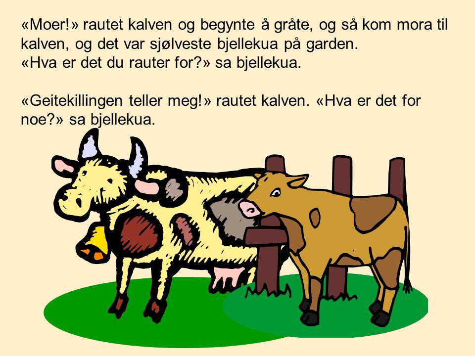 «Moer!» rautet kalven og begynte å gråte, og så kom mora til kalven, og det var sjølveste bjellekua på garden.