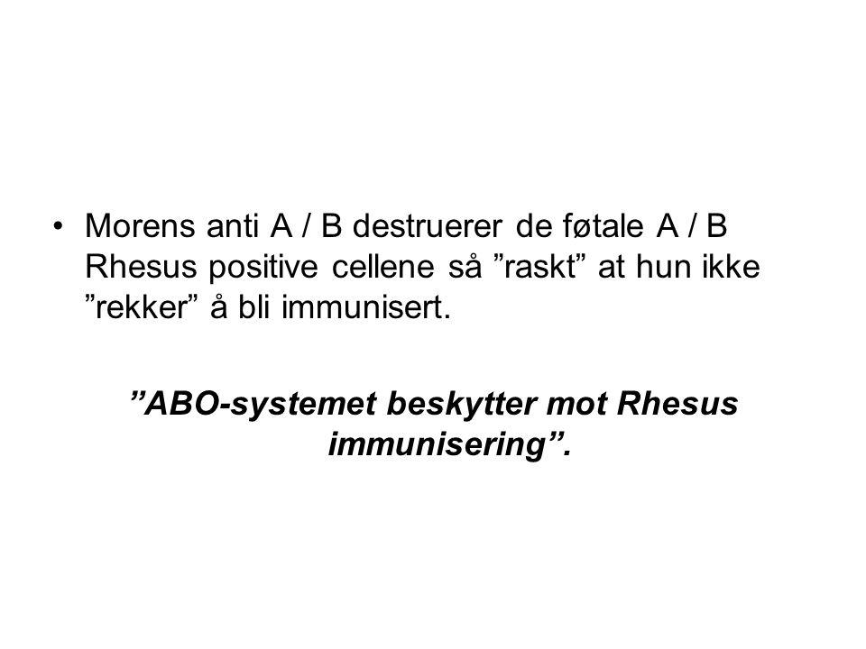 ABO-systemet beskytter mot Rhesus immunisering .