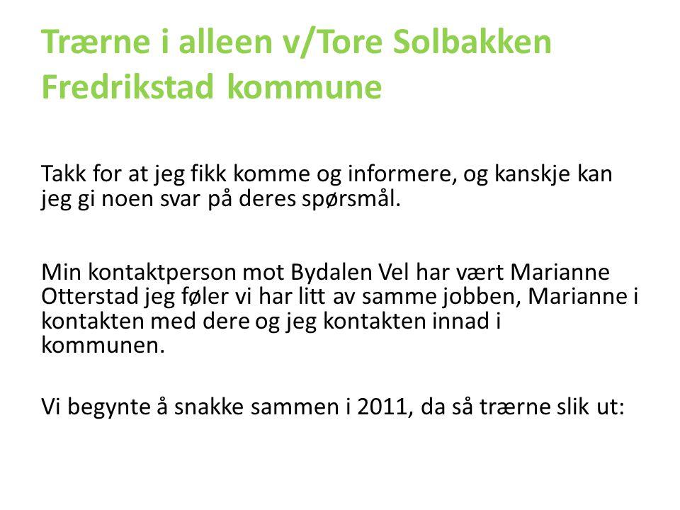 Trærne i alleen v/Tore Solbakken Fredrikstad kommune
