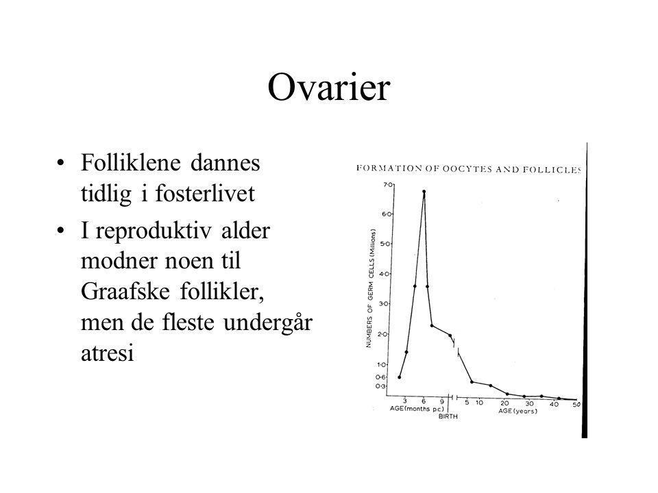 Ovarier Folliklene dannes tidlig i fosterlivet