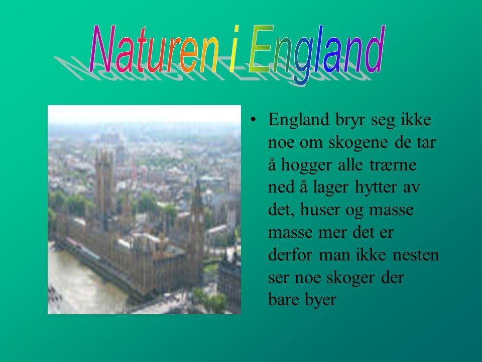 Naturen i England