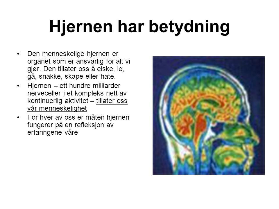 Hjernen har betydning