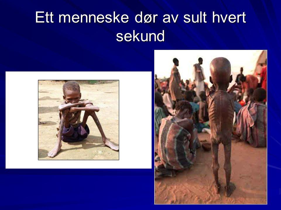 Ett menneske dør av sult hvert sekund