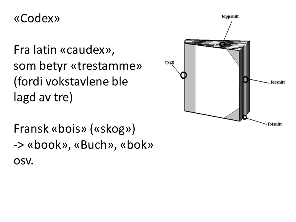 «Codex» Fra latin «caudex»,