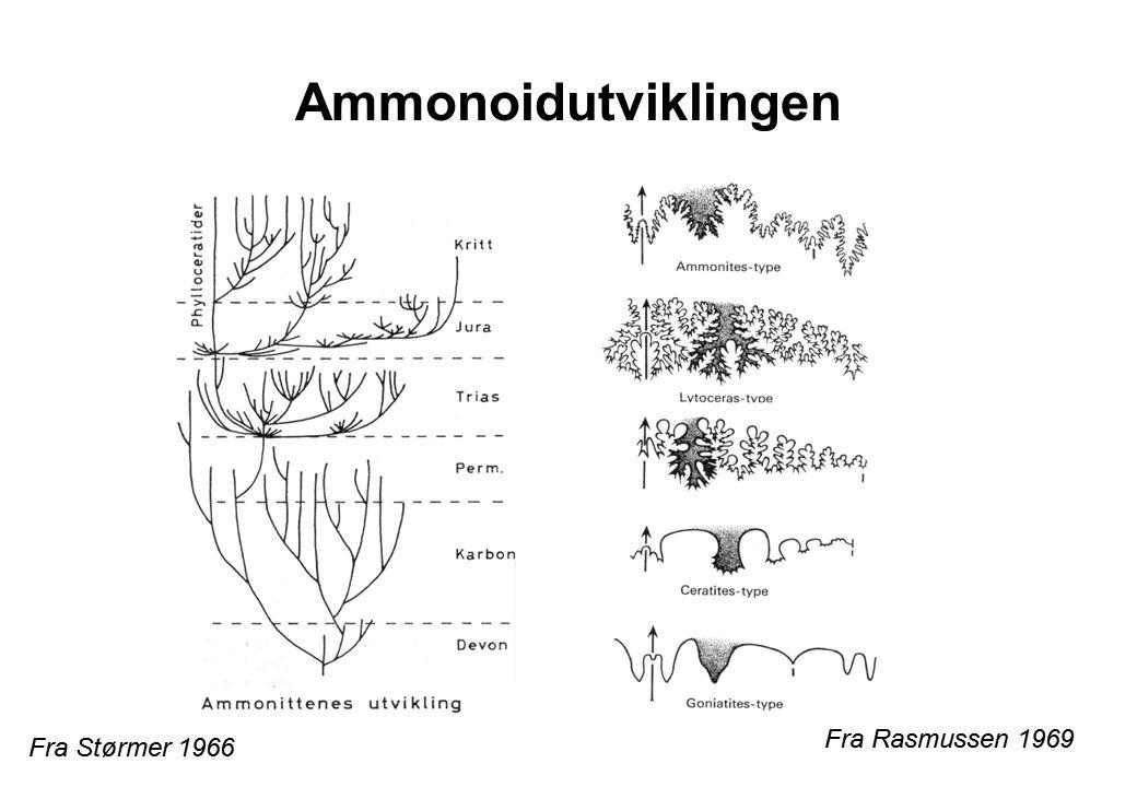 Ammonoidutviklingen Fra Rasmussen 1969 Fra Størmer 1966