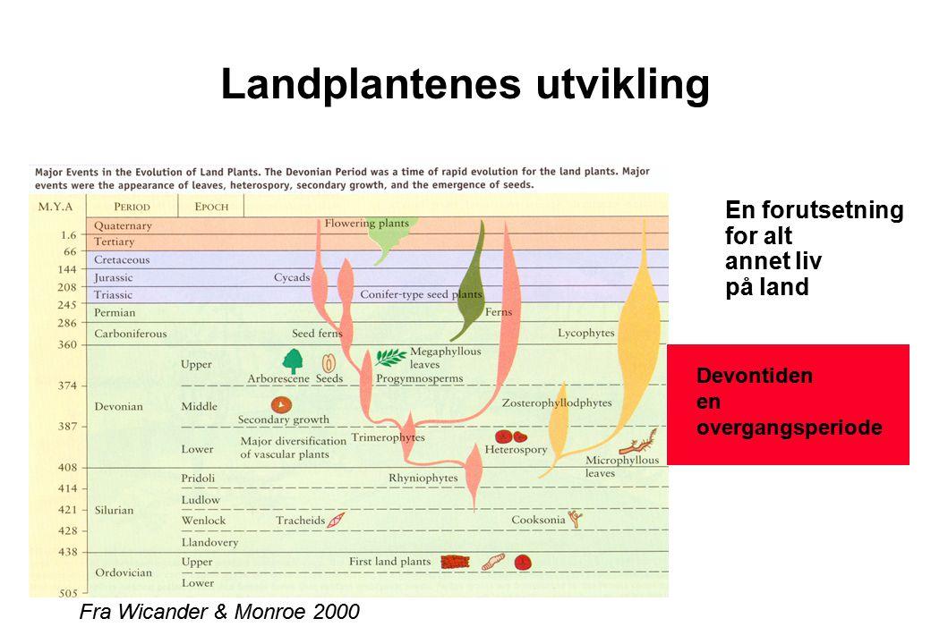Landplantenes utvikling