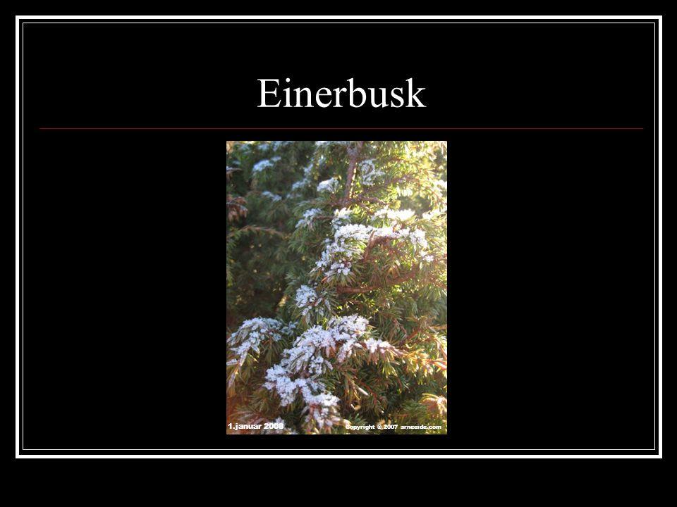 Einerbusk 1.januar 2008 Copyright ® 2007 arneeide.com