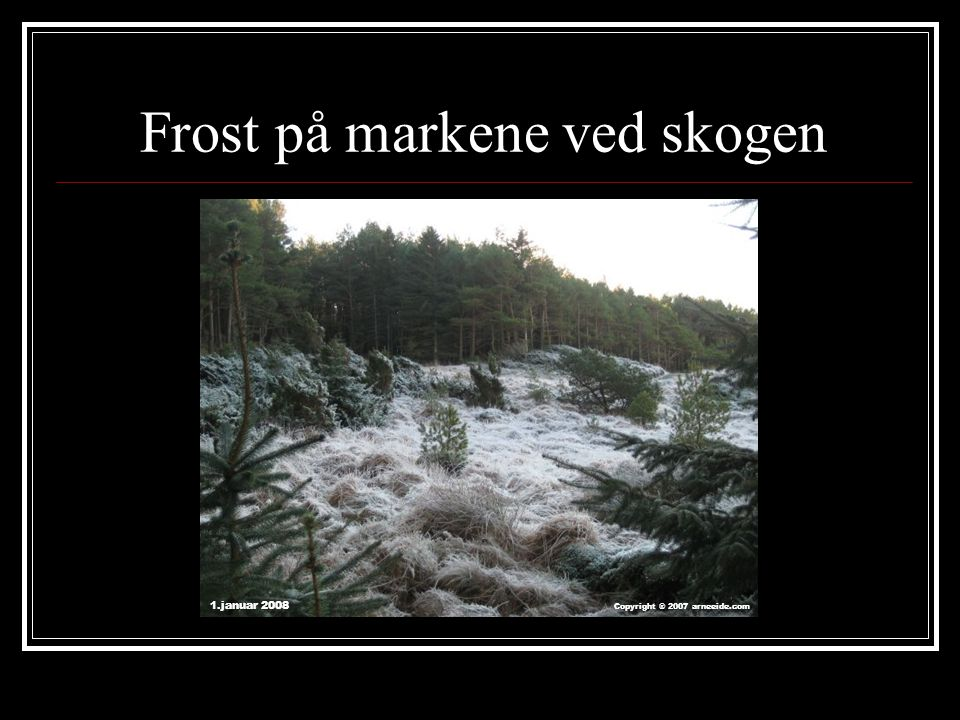 Frost på markene ved skogen