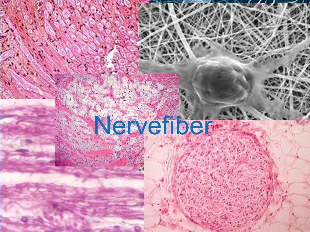 Nervefiber