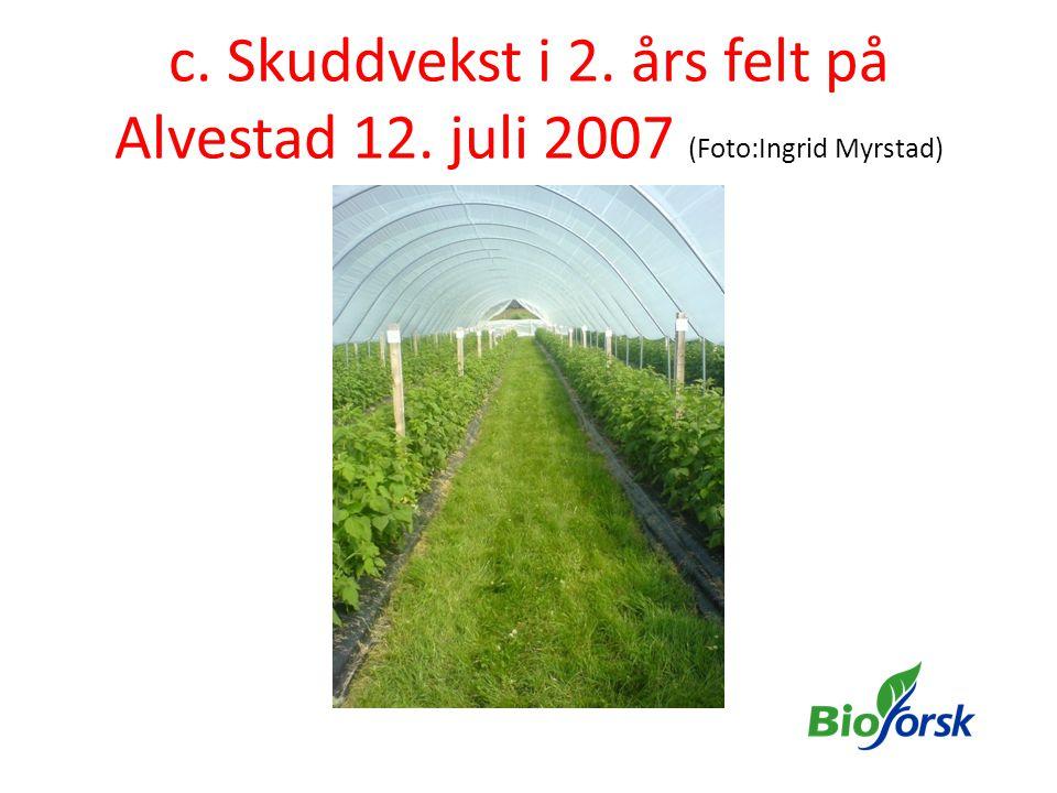 c. Skuddvekst i 2. års felt på Alvestad 12